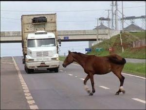 Projeto do Dep. Ricardo Izar pela rápida remoção de animais envolvidos em acidente é aprovado.