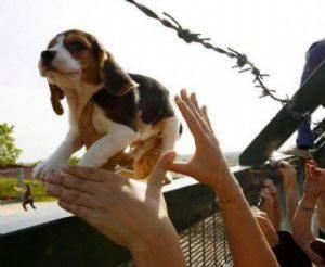 Anda: Projeto institui o dia nacional da proteção animal