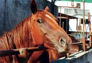 Anda: Projeto visa proibir a morte de cavalos, mulas e jumentos no Brasil