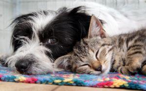 Anda: Projeto prevê que despesas veterinárias de animais adotados sejam deduzidas do imposto de renda