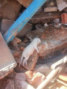 Anda: Demolição de casa no Tatuapé com cerca de 40 gatos é paralisada após reunião