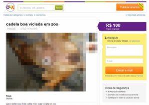 Anda: Investigação e Punição sobre o caso de zoofilia no site OLX