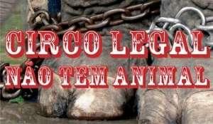 Maioria das propostas proíbe uso de animais em circo, mas assunto é polêmico