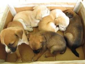 Comissão aprova projeto que substitui execução por esterilização de animais
