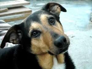 Código Penal poderá incluir pena de até 4 anos de prisão para quem abandonar animais