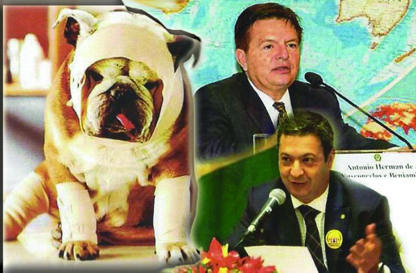 Leis mais rígidas para quem cometer crimes contra animais