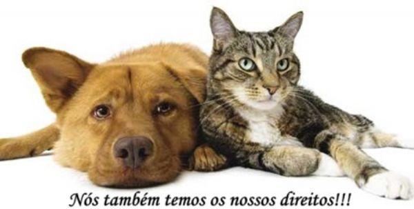 CAUSA ANIMAL – Paulínia SP
