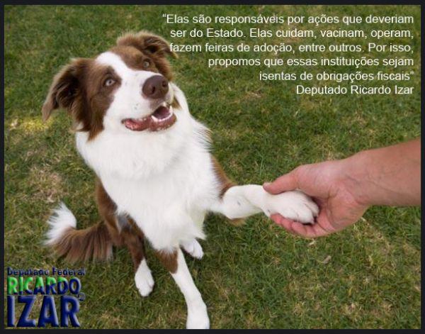 Isenção de impostos para entidades de proteção animal