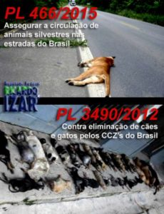 MAIS AVANÇOS PARA A CAUSA ANIMAL