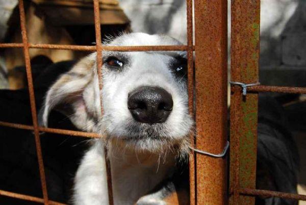 PL 6799/2013 Comissão considera animais não humanos como sujeitos de direitos