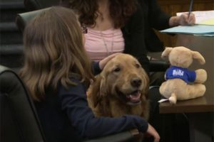 Cachorros são utilizados em tribunais nos EUA para acalmar crianças vítimas de abusos