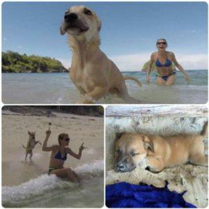 Turista se apaixona por cão perdido durante férias e o leva para casa