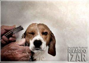 Comissão aprova projeto que exige câmera em serviço de banho e tosa de cães