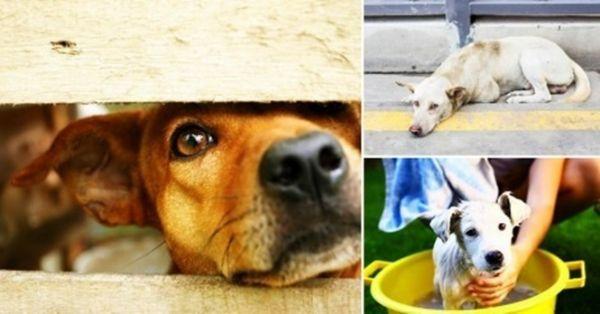 Holanda se torna o 1º país sem cães abandonados e sem sacrificar animal algum