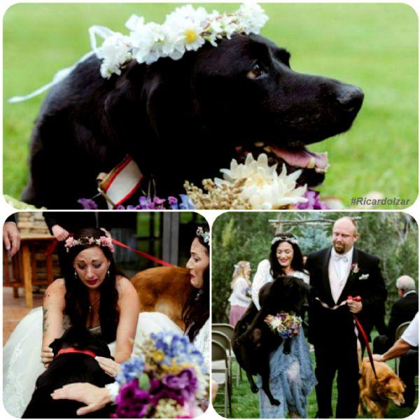 Labrador com tumor cerebral leva sua dona até o altar