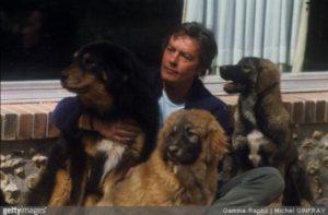 Ator famoso vira o salvador para centenas de cães sem lar