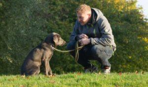 """Cientistas analisam cérebro de cães e concluem que eles também são """"pessoas""""."""