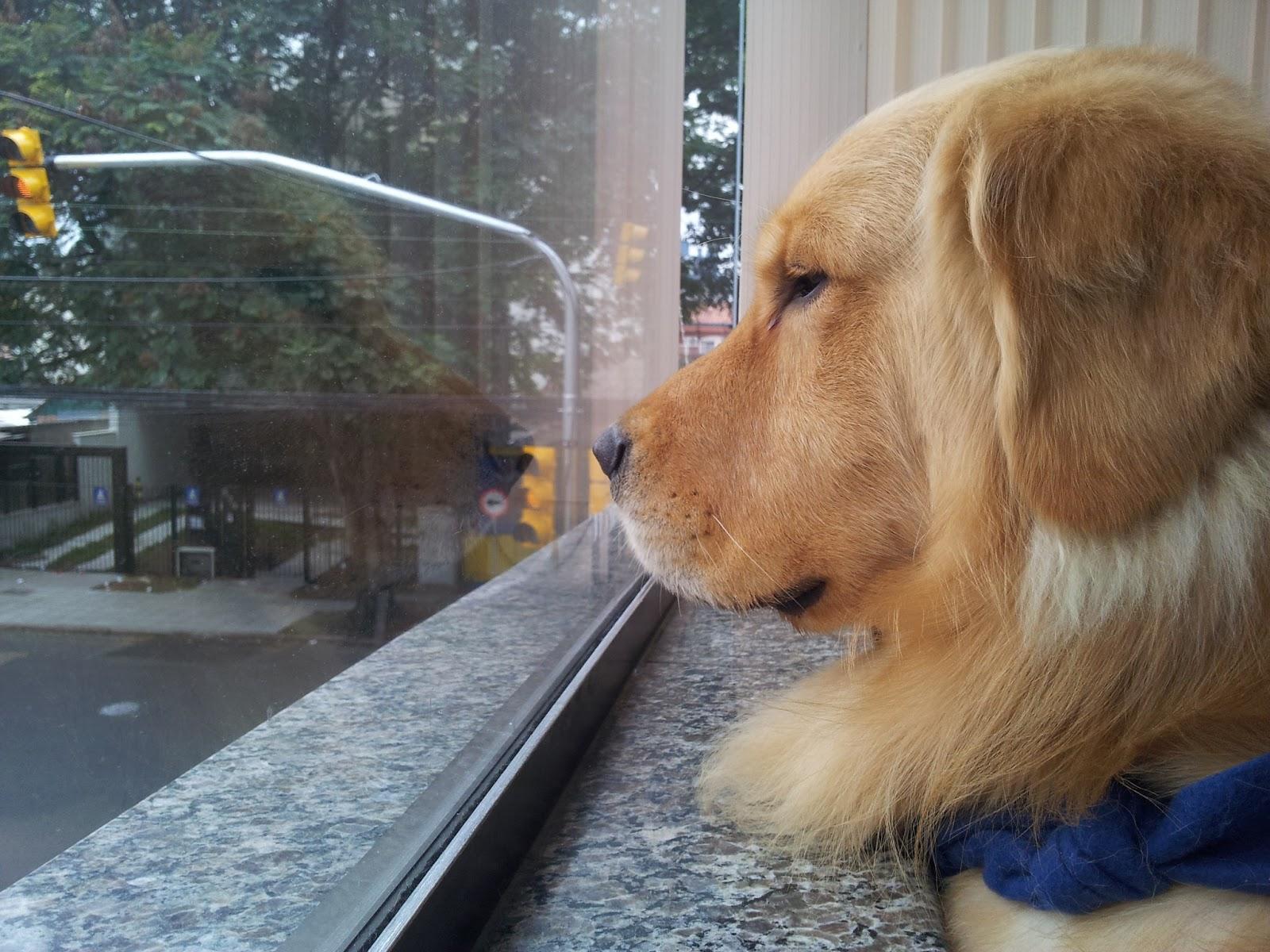 Como os animais sabem que seus donos estão chegando ?