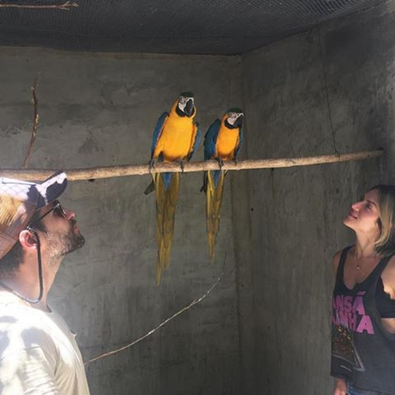 Bruno Gagliasso cede seu próprio sítio para soltura de animais silvestres no Rio