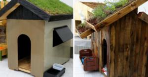 Alunos de engenharia constroem incríveis casas sustentáveis para cachorros