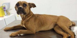 Populares denunciam suposto estuprador de cães em Arapongas