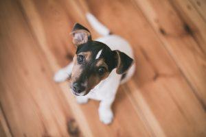 Zoofilia pode se tornar crime: Projeto de Lei em defesa dos animais é aprovado na Câmara dos Deputados