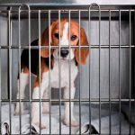 imagem materia 150x150 - Projeto que proíbe uso de animais em testes de cosméticos deve ser votado