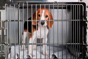 Projeto que proíbe uso de animais em testes de cosméticos deve ser votado