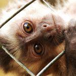 Animais silvestres, Defesa dos animais
