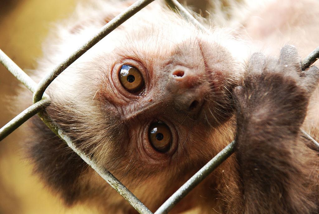 Projeto de Lei de Ricardo Izar propõe maior rigidez na proteção animal