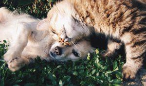 Cachorro e gato 300x177 - Ações pelos Animais
