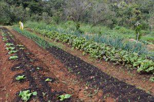 Ricardo Izar, Agricultura Orgânica, Agroecologia