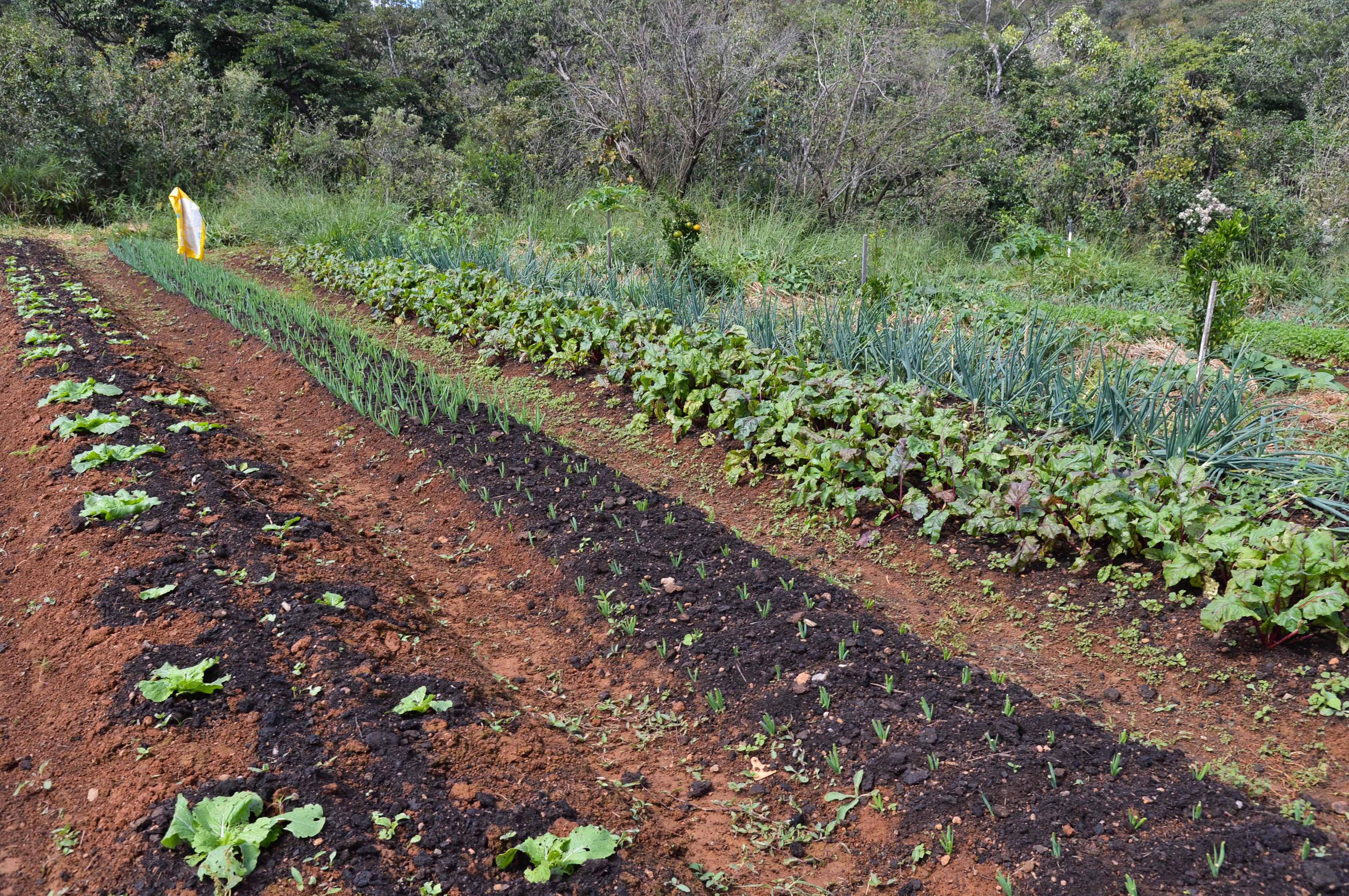 Prática de cultivo orgânico cresce no cenário nacional