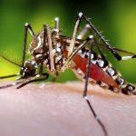 5283441969 0ec8e709a9 o 150x150 - Começa campanha de combate ao mosquito transmissor da dengue, zika e chikungunya
