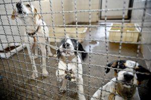 Aprovado aumento de pena para o crime de maus-tratos a animais