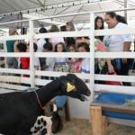 untitled 150x150 - PL prevê proibição de sorteio e distribuição de animais como prêmios e brindes!