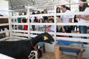 untitled 300x200 - PL prevê proibição de sorteio e distribuição de animais como prêmios e brindes!