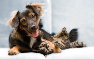 happy dog and cat 300x188 - PL visa criação de Registro Nacional de Animais Domésticos